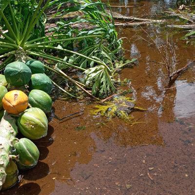 Acusan al Gobierno de QR de ignorar y dejar sin apoyo a productores de Lázaro Cárdenas, pese a daños por las lluvias