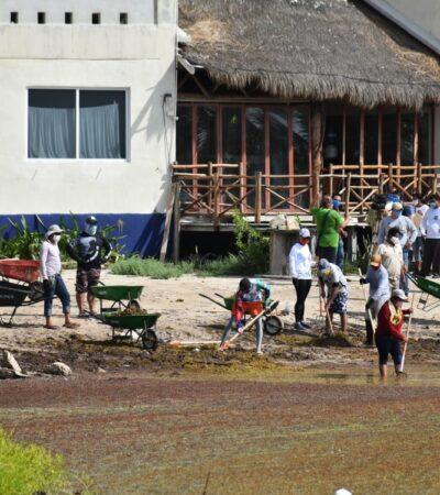 En un mes recolectan 90 toneladas de sargazo en Mahahual