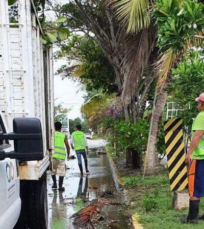 Cuadrillas municipales retiran ramas, árboles, postes y cables caídos en Puerto Morelos, tras paso de la tormenta 'Cristóbal'