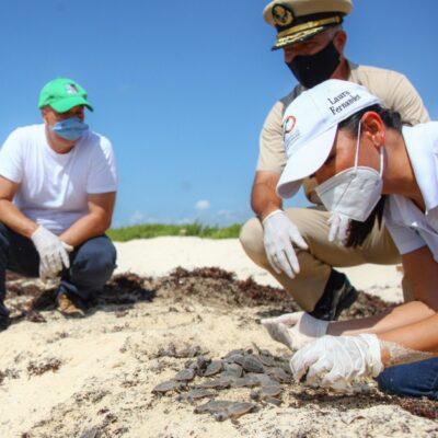 Laura Fernández encabeza liberación de crías de tortugas marinas en Punta Brava