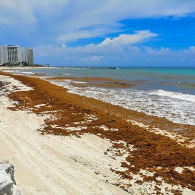 Reporta Semar una disminución de sargazo desde el 21 de julio en el Caribe Mexicano