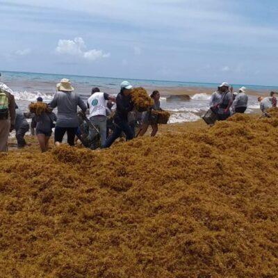 Sargazo no da tregua, pese a esfuerzos por mantener las playas de Cancún limpias