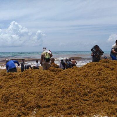 Aseguran autoridades que tienen bajo control el recale masivo de sargazo en playas de Cancún
