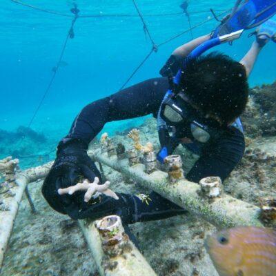 Hay avances en la restauración de arrecifes en Cozumel, reporta la Fundación de Parques y Museos