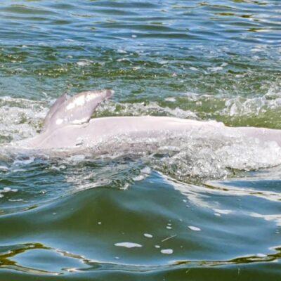 Pesca ilegal provoca la muerte de un delfín en Holbox