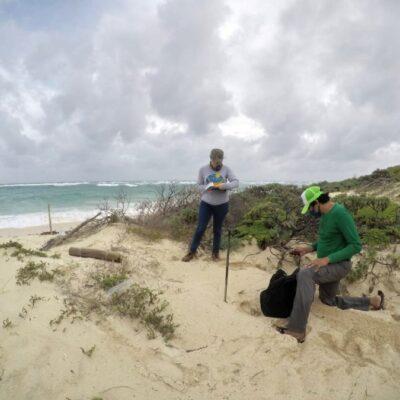 Marcan y monitorean más de 230 nidos de tortugas marinas en Cozumel