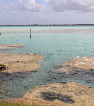 Analiza Conanp decretar a la Laguna de Bacalar como hábitat crítico de estromatolitos