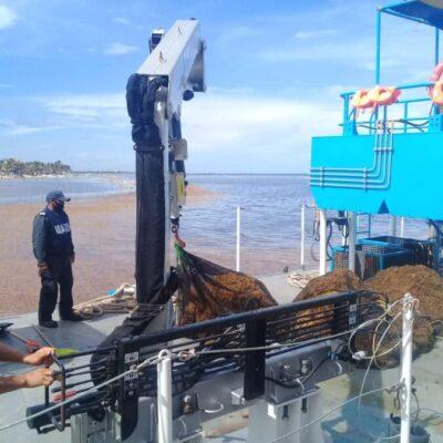 Marina ha recolectado 803 toneladas de sargazo en playas de Quintana Roo