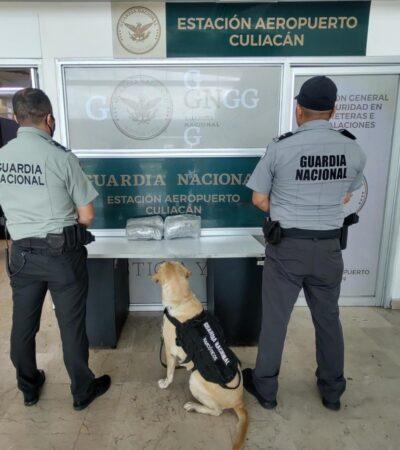 Binomios caninos detectan droga que pretendían mandar a QR desde Sinaloa