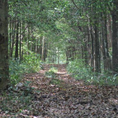 Instancias ambientales apoyarán acciones de desarrollo rural y manejo forestal sustentable para mejorar los reservorios de carbono