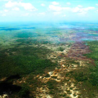 """""""DESTRUCCIÓN SIN PRECEDENTE"""": Advierten de un """"pronunciado"""" declive de la Biodiversidad en América Latina"""