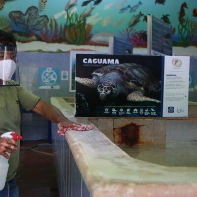Calculan empresarios de Cancún que este año se recuperará del 50 al 60% de empleos perdidos