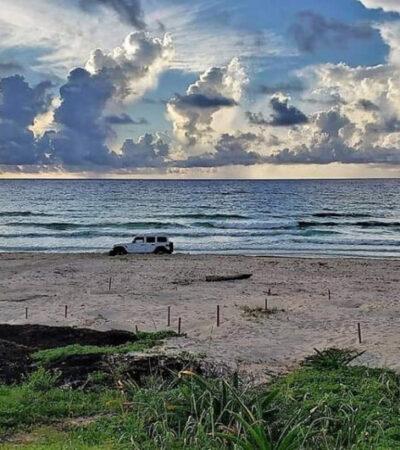 Detienen a sujeto que ingresó con su auto a una zona de anidación de tortugas en Cozumel