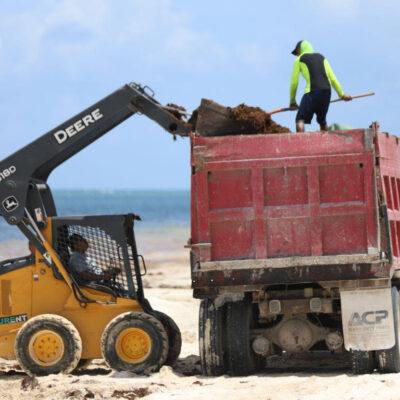No bajan la guardia en el combate al sargazo en Puerto Morelos