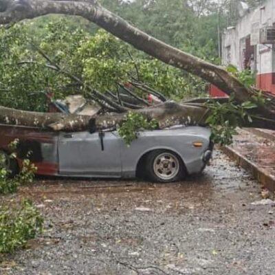 Deja 'Gamma' inundaciones, árboles caídos y fallas en servicio de luz en internet en Yucatán