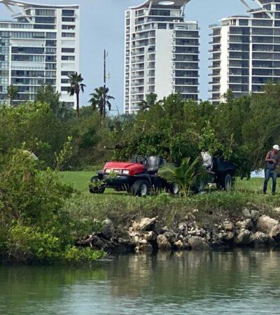 Denuncian nuevo corte de manglar en Puerto Cancún